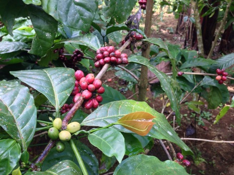 POST-ROAST- THE COFFEE INDUSTRY'S UNCERTAIN FUTURE