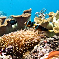 Restoration or Regret: The Rehabilitation of Coral Reefs in Bali, Indonesia
